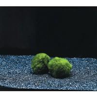 Waterplant Mosbol Chladoflora XXL