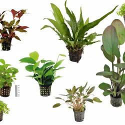 Plantenpakketten