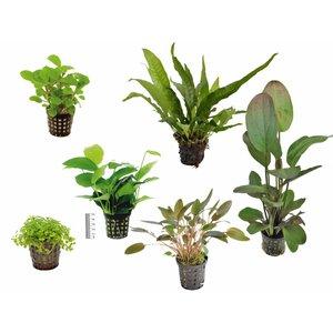 Plantenpakket Small