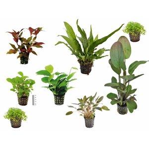 Plantenpakket Medium
