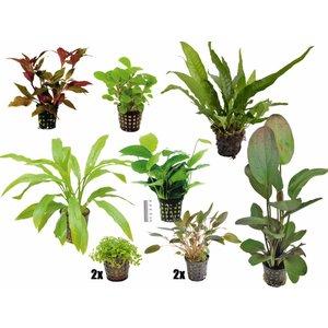 Plantenpakket Large