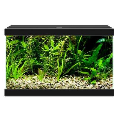 Ciano Aqua 20 LED Zwart