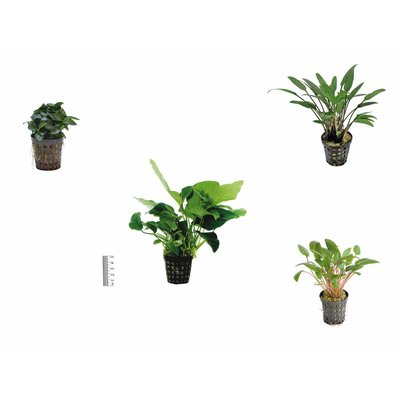 Plantenpakket Easy Small