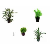 Plantenpakket Azië small