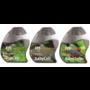 Clean Pakket - Procell/Easycell/Bacto Turbo 150 ml