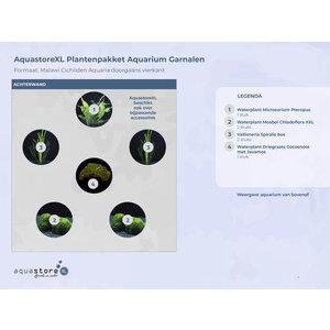 AquastoreXL Plantenpakket Aquarium Garnalen