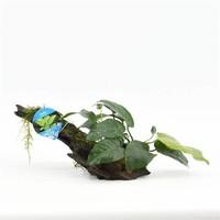 Waterplant Driftwood XS met anubias