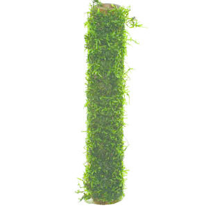 Waterplant Bamboo stok met Javamos 20cm