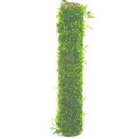 Waterplant Bamboo stok met Javamos XL 30cm
