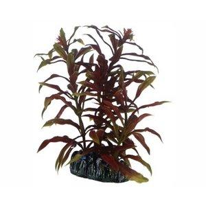 Hobby Plant Nesaea 13cm