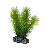 Hobby Plant Mayaca 7cm
