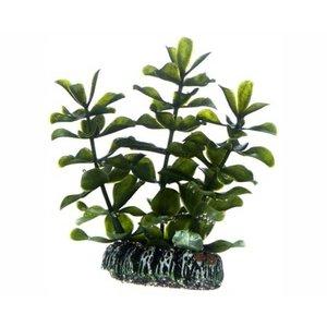 Hobby Plant Bacopa 7cm