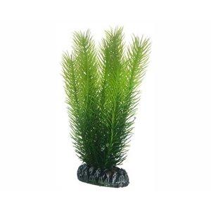 Hobby Plant Mayaca 16cm