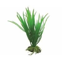Hobby Plant Cyperus 16cm