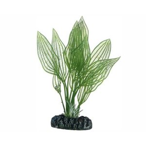 Hobby Plant Aponogeton 16cm