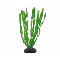 Hobby Plant Vallisneria 20cm