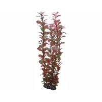 Hobby Plant Ludwigia 34cm