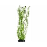 Hobby Plant Lagarosiphon 34cm