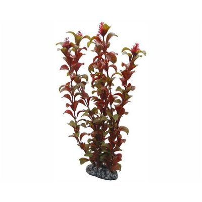 Hobby Plant Rotala 30cm