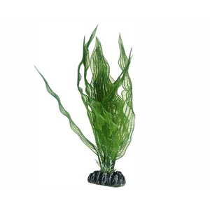 Hobby Plant Aponogeton 25cm