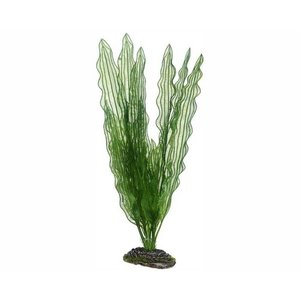 Hobby Plant Aponogeton 40cm