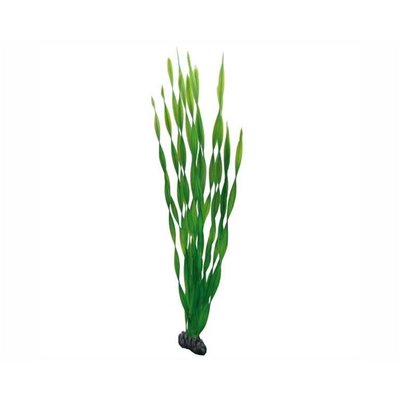 Hobby Plant Vallisneria 60cm