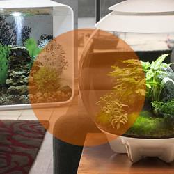 biOrb aquaria