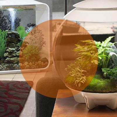 biOrb aquarium