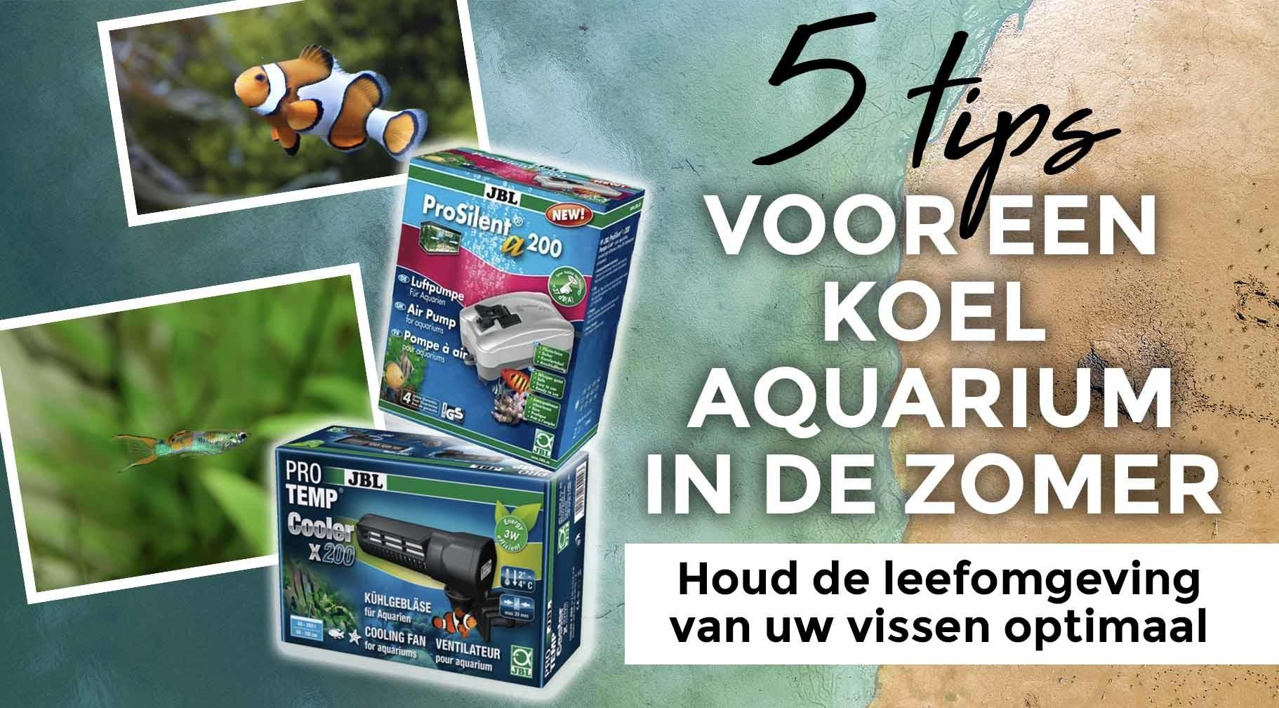 5 tips om uw aquarium koel te houden in de zomer