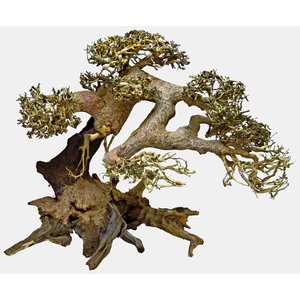 Superfish Bonsai Driftwood L