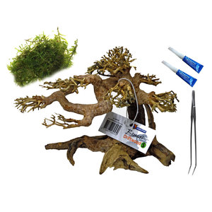 AquastoreXL voordeel aquarium bonsai bundel