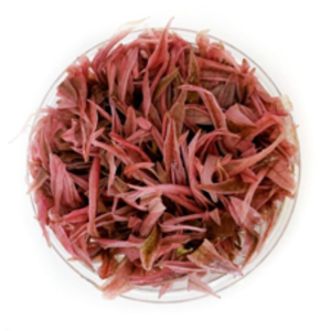 Waterplant Cryptocoryne Wendtii 'Flamingo' in bakje