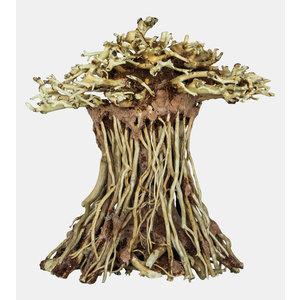 Superfish Bonsai Mushroom Small