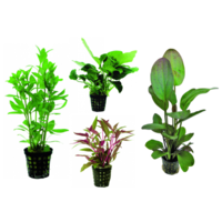Waterplant Plantybox Special Offer