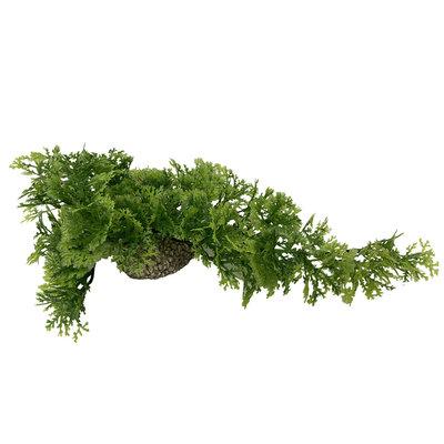 Aqua D'ella Hangend Mos 5cm Groen en Rood