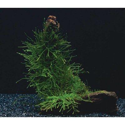 AquastoreXL Doe-het-zelf Decoratie set Hout