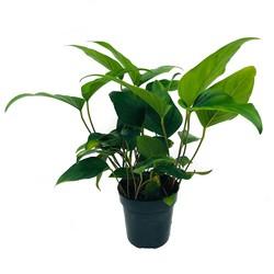 Achtergrond planten