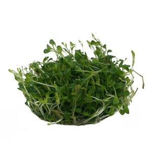 Waterplant Easy grow Glosso st Elantinoides (nr 4)