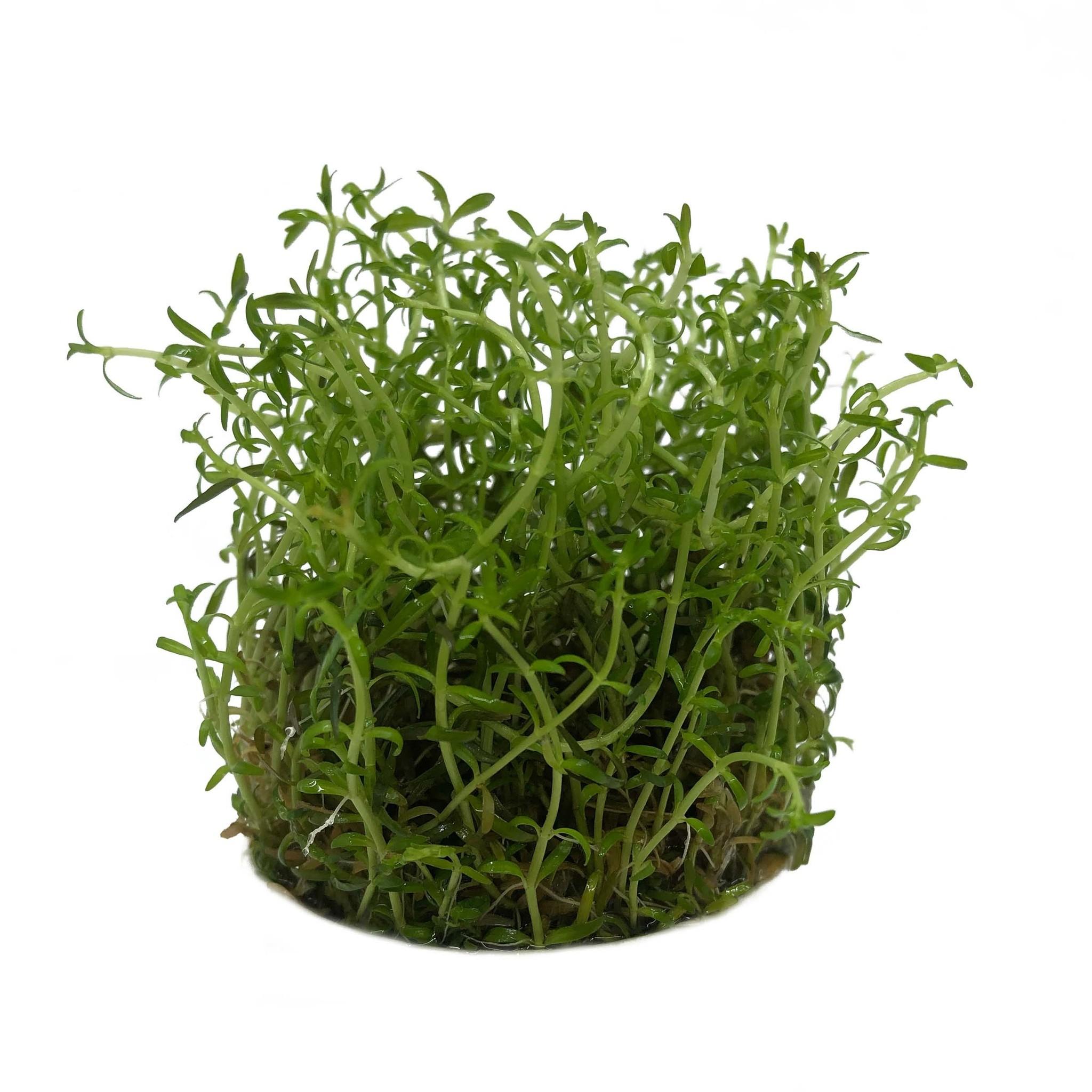 Planten voor op de voorgrond