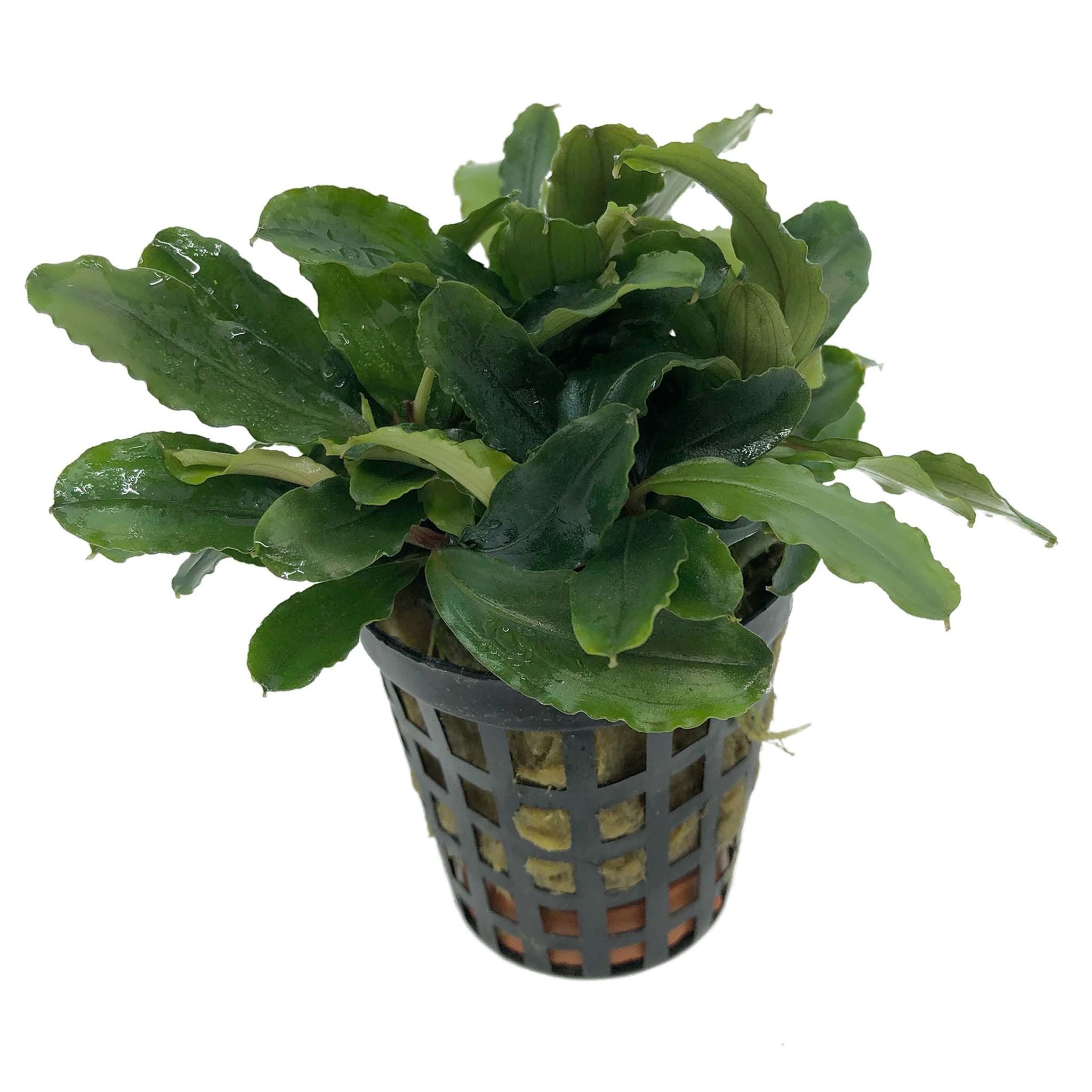 Planten voor tussenin