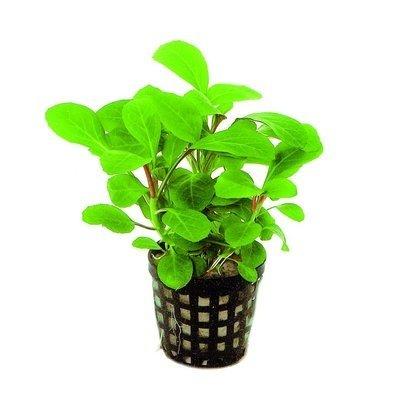 AquastoreXL Plantenpakket Populair