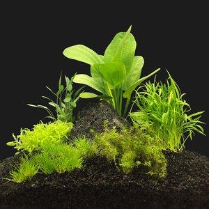 AquastoreXL Plantenpakket Garnaal