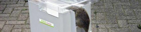 EKO 1000 Rattenvangunit