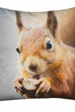 By Nord Baby Squirrel