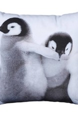 By Nord Baby penguins playing