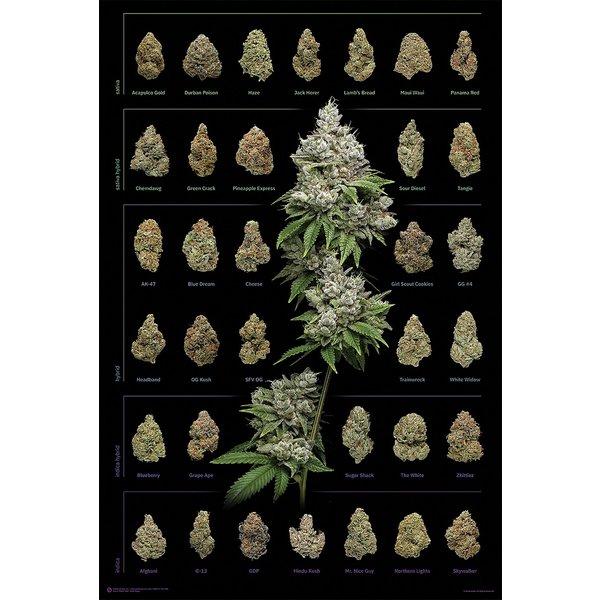Cannabis - Maxi Poster