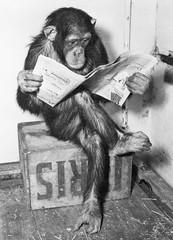 Producten getagd met apen poster