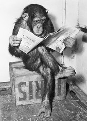 Producten getagd met apen