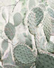 Producten getagd met cacti