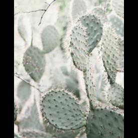 Cactus Mini Poster
